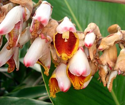 Jardin Botanique Deshaies En Guadeloupe