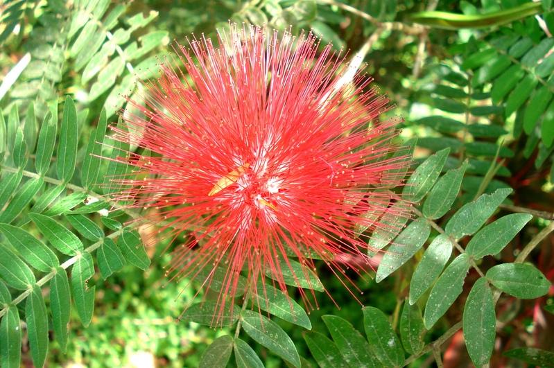 Fabulous Fleurs de Martinique, Antilles EP94