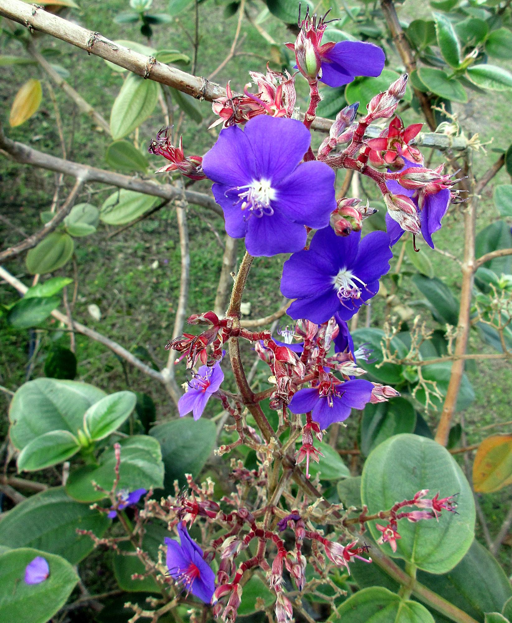 Quelques Fleurs De L Ile De La Reunion
